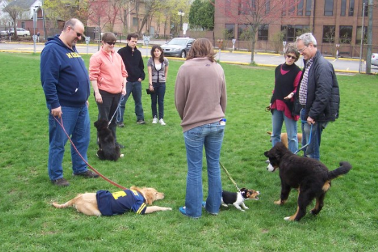 Ann Arbor Animal Hospital Dog Training