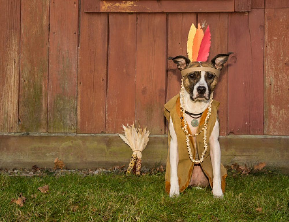 Thanksgiving tips with pets