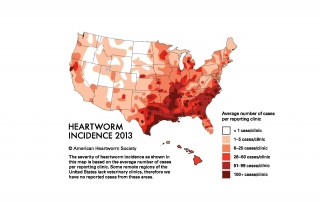 2013 Heartworm incidence map