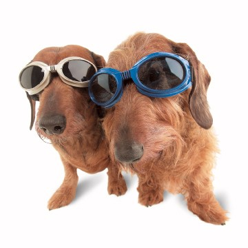 What are Doggles?