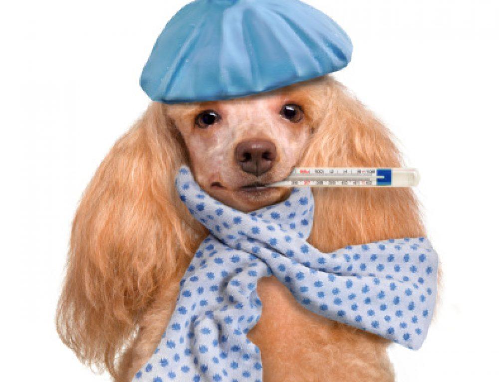 Canine Influenza outbreak in Toledo