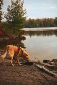 dog-enjoying-the-beach