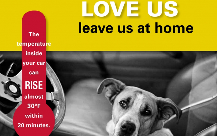 Thinking about leaving your dog alone in the car?