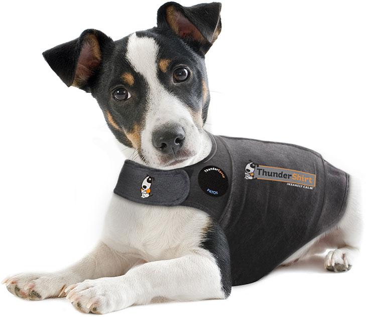 Thunder Treats For Dogs