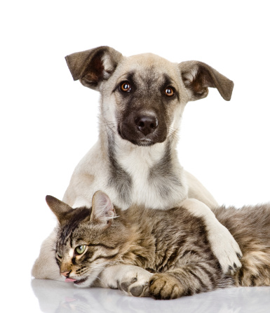 How To Deter Dogs From Eating Cat Food