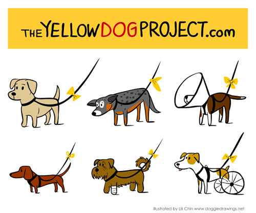 Yellow-Dog-Project-for-sick-reactive-injured-old-dogs