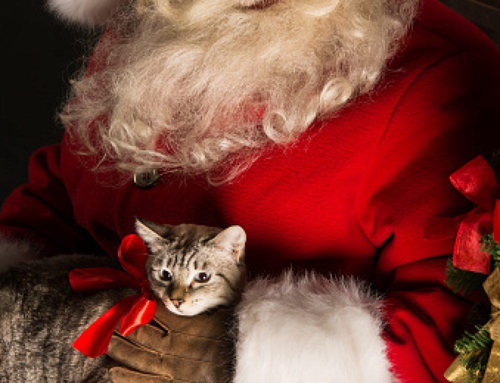 Santa at A2AH!