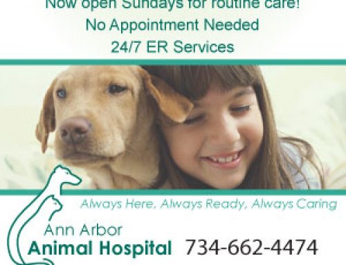 New Sunday hours for Routine Care!