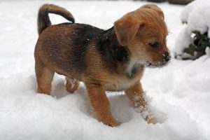 brown and black puppy in snow