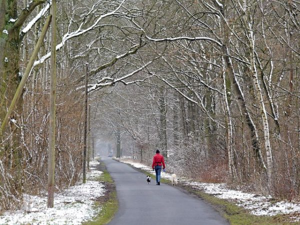 person in red jacket walks two dogs down wintery path