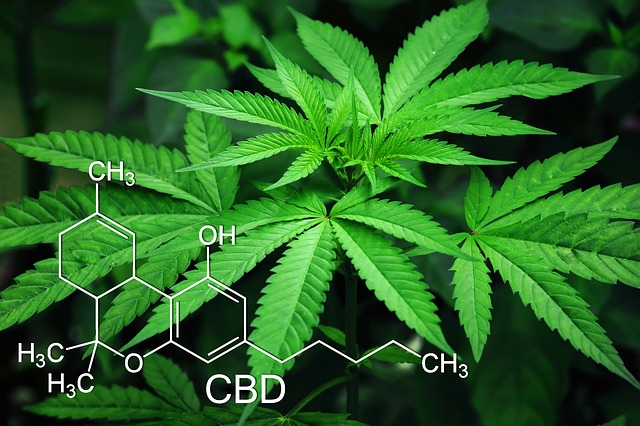 CBD Cannabidiol and pets