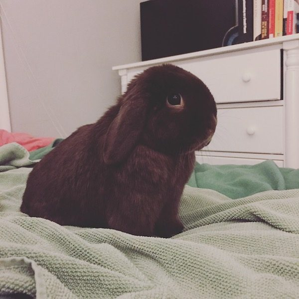 family rabbit Lincoln sits on a blanket