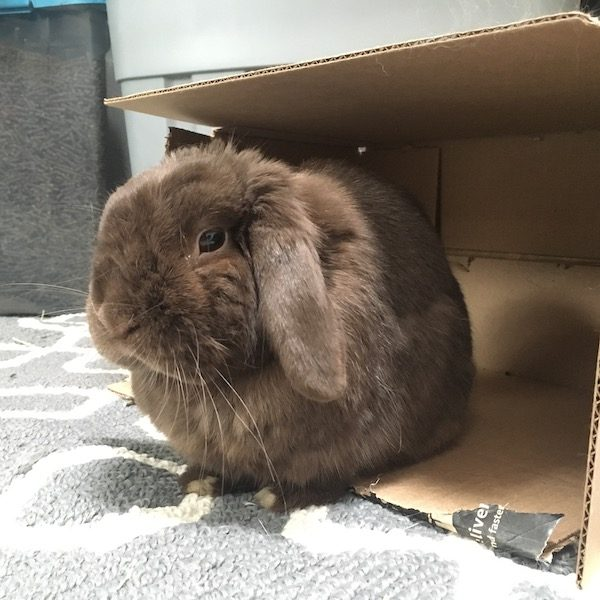 family rabbit sits in front of cardboard box