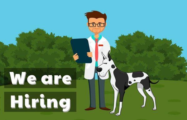 jobs career opportunities we are hiring