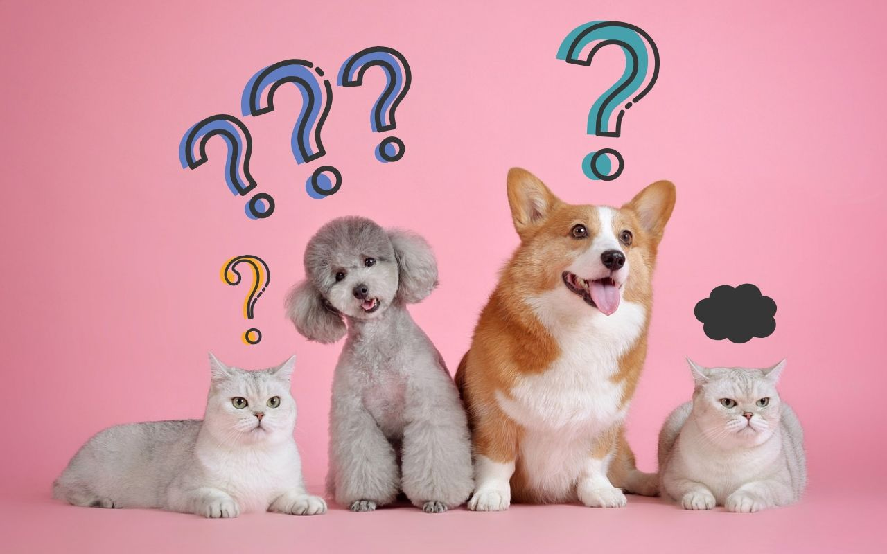 emergency service questions dogs cats