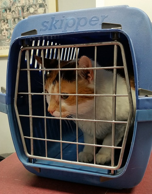 cats need vet visits cat carrier