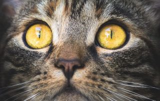 eye problems in dogs and cats should be treated immediately