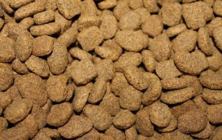 pet foods and dilated cardiomyopathy